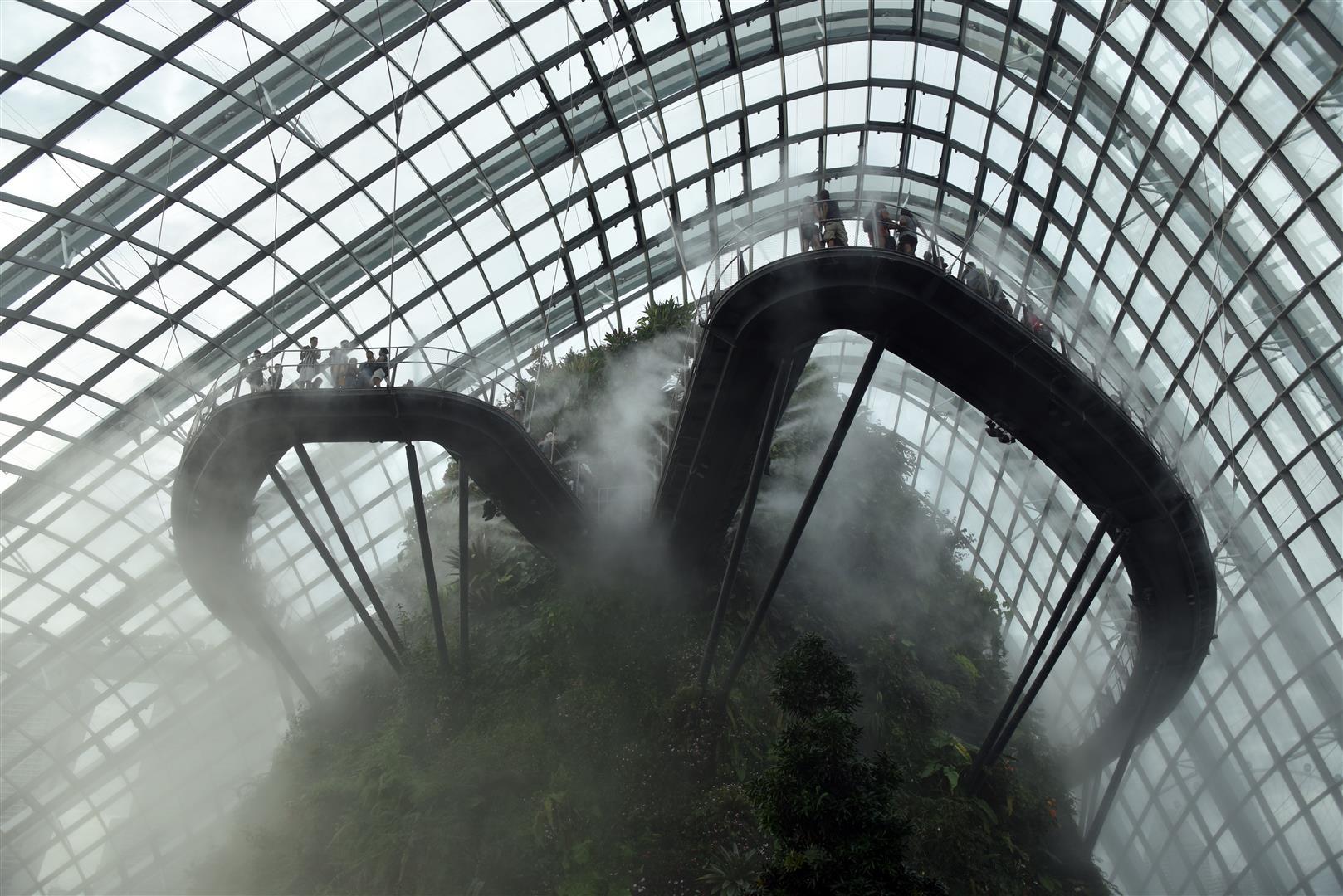 Cloud Forest3 (Large)