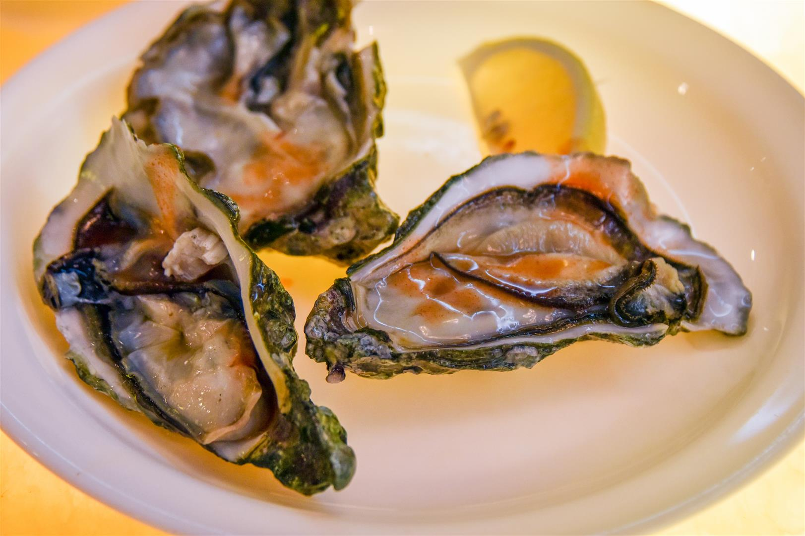 Oysters (Large)