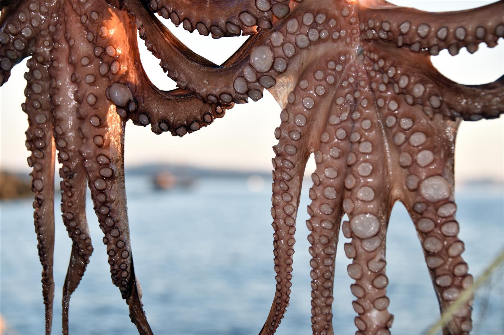 Food - Calamari2 (Large)