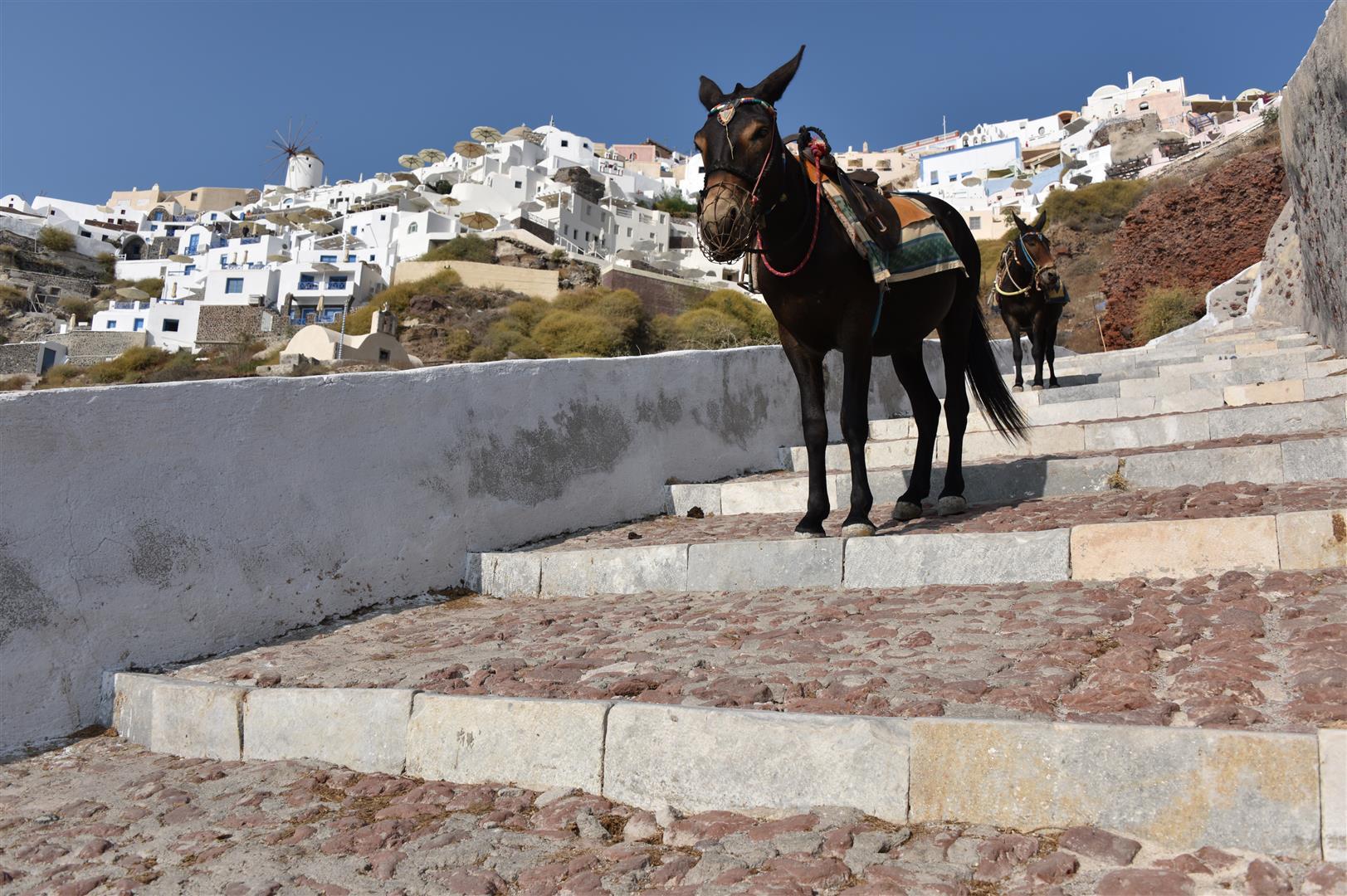 S - Donkeys (Large)